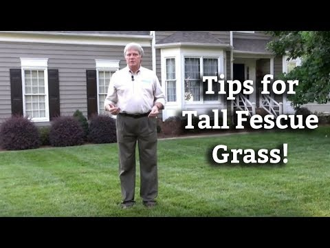 , title : 'Tall Fescue Grass - Expert Lawn Care Turf Tips