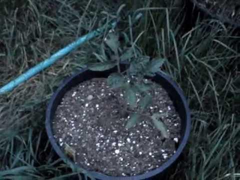 Ilang herb itinuturing ng mga bulate