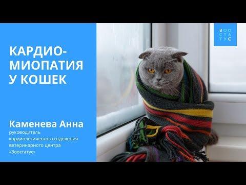 Кардиомиопатия у кошек (болезнь сердца)
