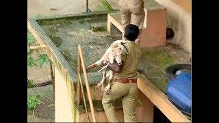 Kerala rains : മഴയുടെ  ദുരിതം മനുഷ്യര്ക്ക് മാത്രമല്ല