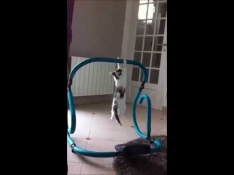 AMAZING CAT PULL UP