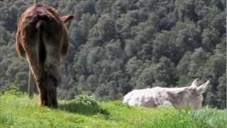 Video del alojamiento Masia La Morera