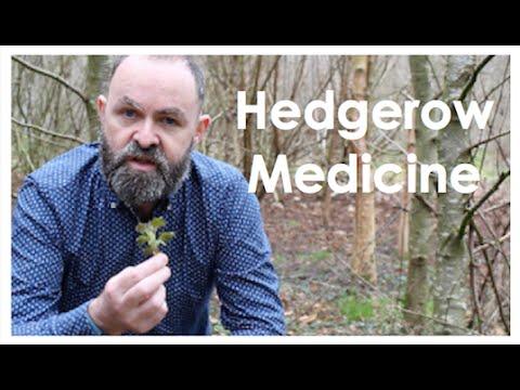 Video Nettle health benefits | Herbal Medicine