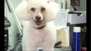dog grooming albuquerque new mexico pet connect video