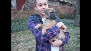 Teddy Happy Dog Rescue