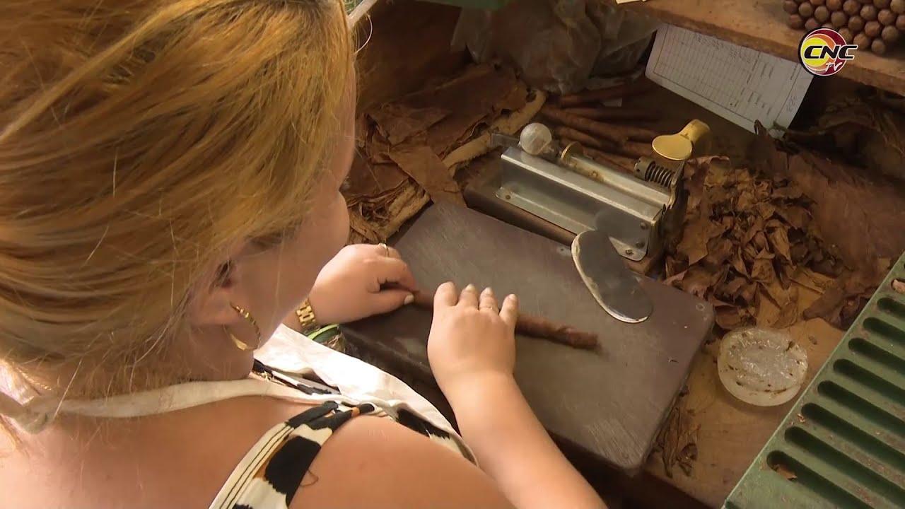 Elevan industrias tabacaleras de Granma sus resultados productivos al cierre de año