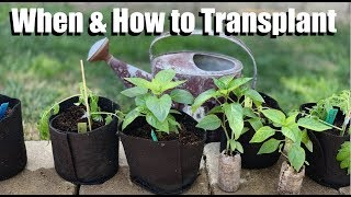 When & How to Transplant Indoor Seedlings Into Larger Containers / Spring Garden Series #5