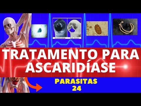 Giardia férgek paraziták
