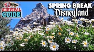Spring Season At Disneyland!   Survival Guide Tips & Tricks + How To Plan Your Visit!
