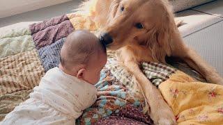 아픈 아기를 걱정하는 강아지