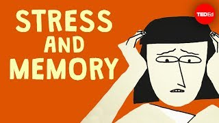 Elizabeth Cox - Does Stress Affect Your Memory?