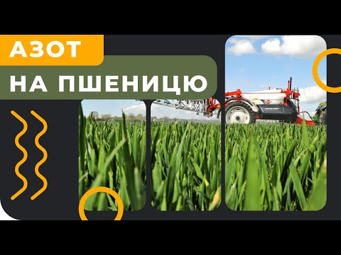 Подкормка зерновых азотом