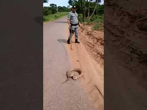 Cobra assusta policial na Estrada da Sama