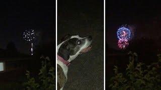 Adorable Blind Dog Still Loves Fireworks
