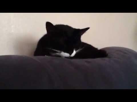 "LMFAO - ""Sexy And I Know It"" (parody) I'm a cat and I know it"