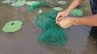 Con Rắn Khổng Lồ Xấu Số l Rô Đồng Lươn To Dính Bẫy l Best Fishing Trap Ever