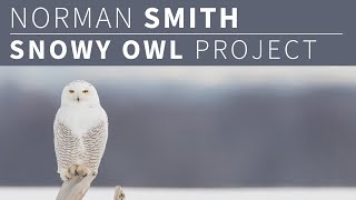 Norman Smith - Snowy Owl Project