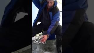Зимняя рыбалка на кривой луке