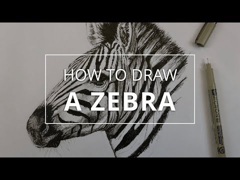 How to Draw a Portrait of a Zebra
