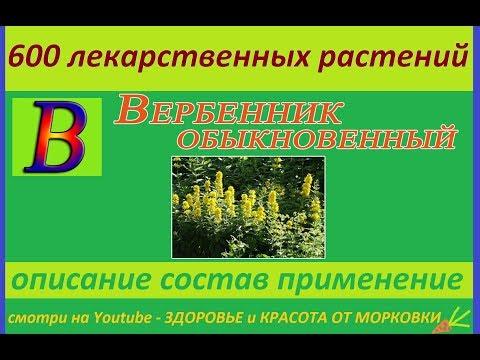 вербейник обыкновенный 600 лекарственных растений