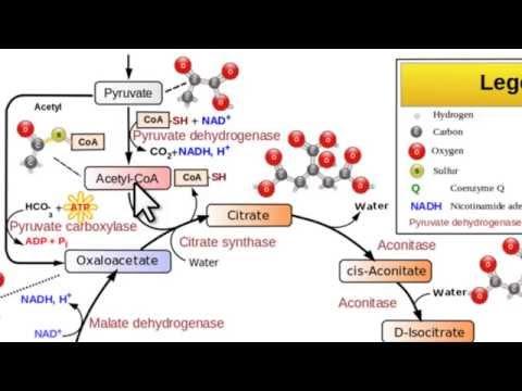 Farmaci per ictus in pazienti con diabete mellito