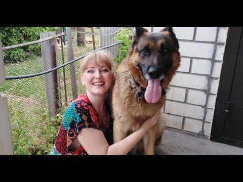 О собачьей шерсти/ О лечении суставов/ О плохом качестве пряжи Ализе Дива