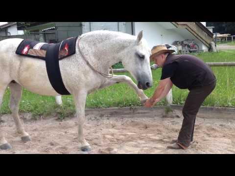 Gribok auf den Beinen die Behandlung vom Knoblauch