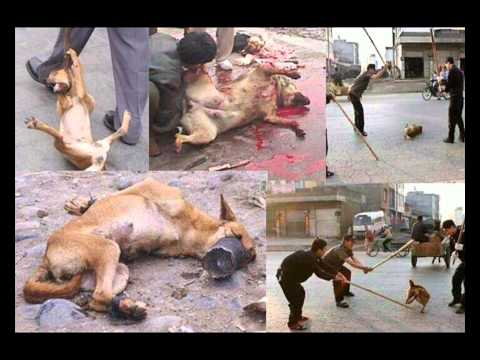 Film Aufklärung Hunde morde Rumänien