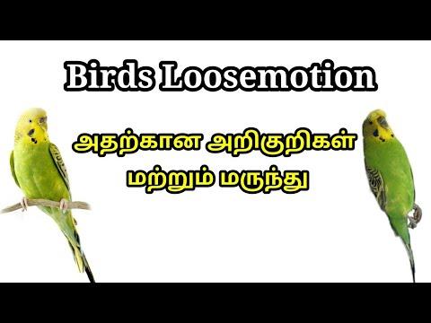 , title : 'Birds Loose Motion Symptoms & Treatment