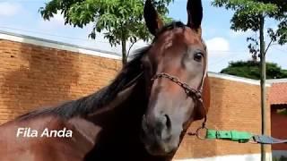 TURFE: Leilão virtual de animais PSI em treinamento será em 16/03