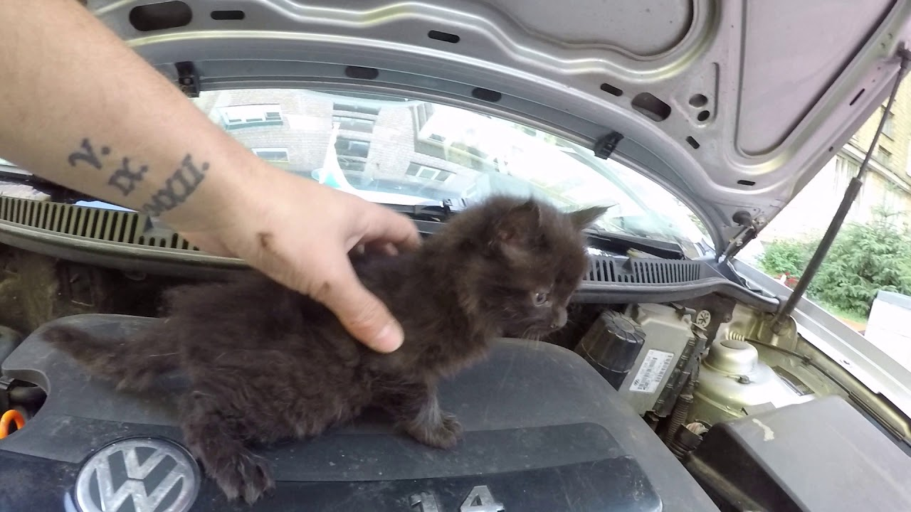 Котята под капотом