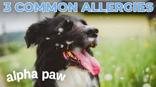 Is Your Dog Allergic To This?!
