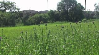 preview picture of video 'Se alquila terreno parcela agrícola en Lliçà de Vall Barcelona 4'