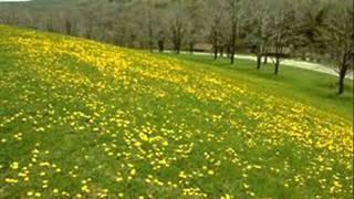 Động hoa vàng - thơ Phạm Thiên Thư - Hoàng Oanh ngâm