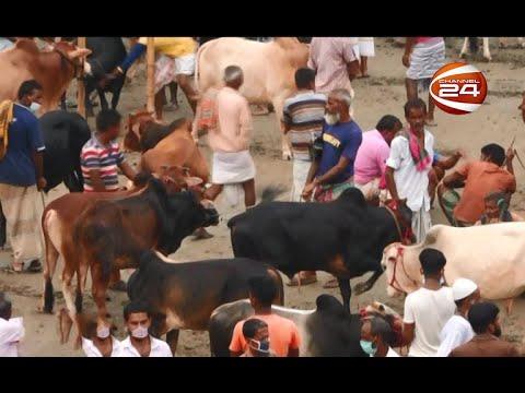 সিরাজগঞ্জের প্রখ্যাত কালিয়াকান্দা পাড়া কোরবানির পশুহাট