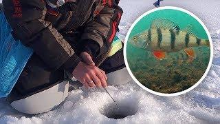 Подкормка на окуня для зимней рыбалки