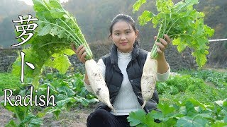 Dig two radishes to make a dish of braised radish and taste the taste of braised pork