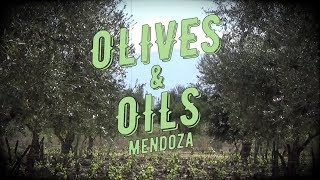 Olive Oil in Mendoza - Part 1: How is it Made?