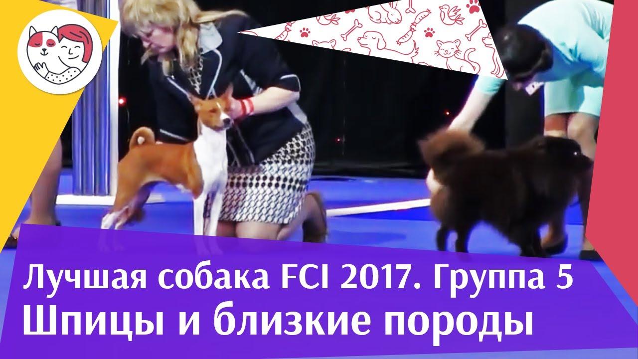 Лучшая собака 5 группы по классификации FCI 18 марта на Евразии 17 ilikepet