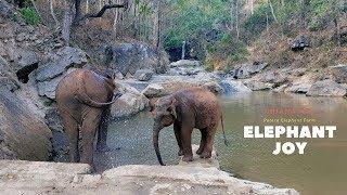 Elephant joy in Chiang Mai, Thailand