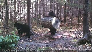 RIBB Feeder !! If you need change and sucess on your Bear Hunt !!