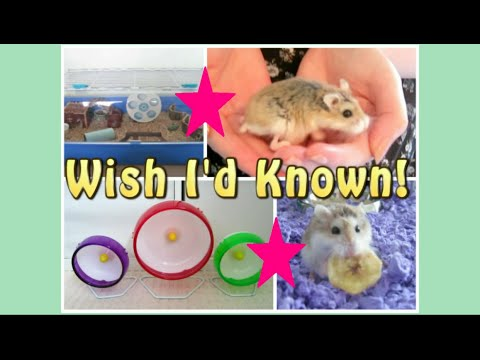 5 THINGS I WISH I'D KNOWN ABOUT HAMSTER CARE!!