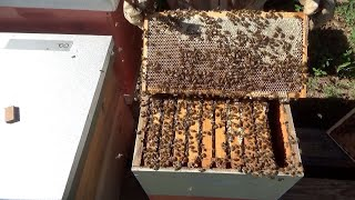 Is it time to place honey supers on your hive?
