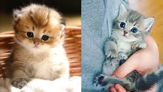 Baby Cats - Cute and Funny Cat Videos Compilation #31   Aww Animals