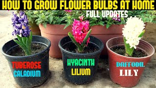 How To Grow Flower Bulbs (WITH FULL UPDATES)