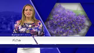 TV Budakalász / Kultúrkörkép / 2018.06.07.