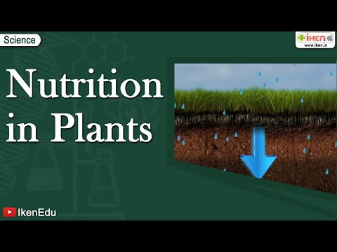 mp4 Nutrition Plant, download Nutrition Plant video klip Nutrition Plant