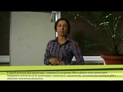 Задачи по цитологии: Правило Чаргаффа 1