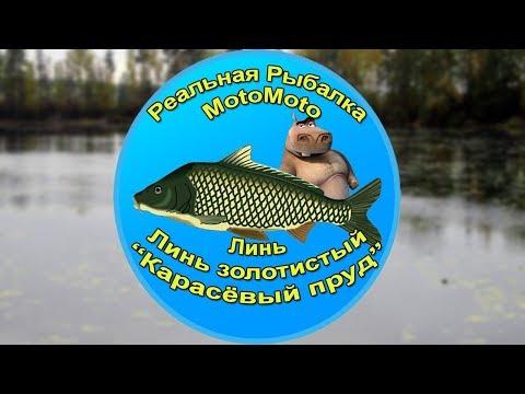 Как поймать Линя и Золотистого линя на Карасёвом пруду [АРХИВ] | Реальная Рыбалка