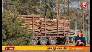 Крадений ліс – Вікна-новини – 18.07.2018